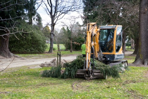 pruning trees using a mini digger